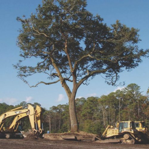 Tree Removal, Stump Removal and Emergency Services from Treeworks of Vermont